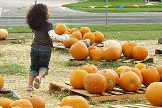 2009-10-25 Pumpkin Patch 009 copy