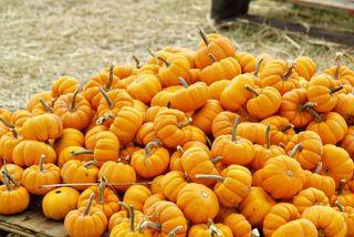 2009-10-25 Pumpkin Patch 006 copy
