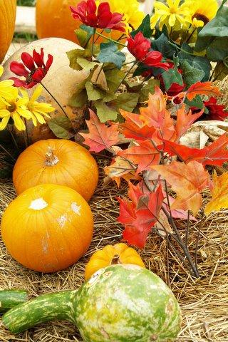 2009-10-25 Pumpkin Patch 015 copy