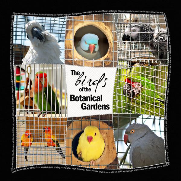 Birds-of-Botanical-Gardens